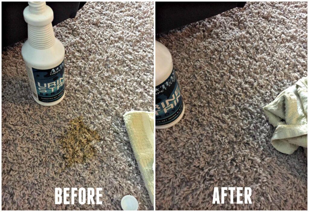 best pet urine remover